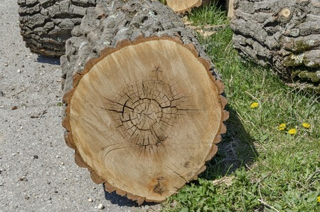 slit: Slit wood trunk in the yeard, Zavet town, Bulgaria
