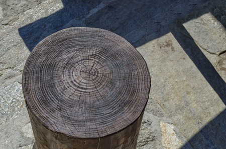 Closeup picture of an old tree trunk section with its annual ring.