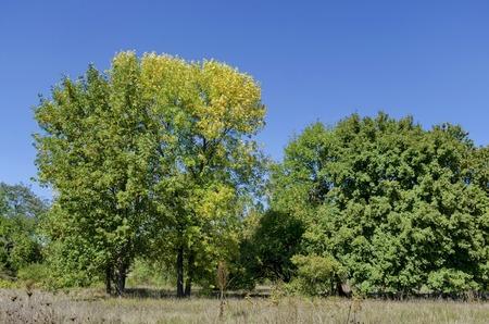 glades: Group trees in early autumn, Razgrad, Bulgaria