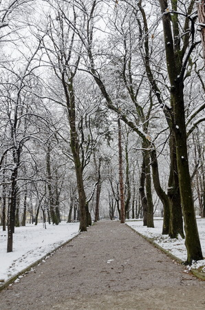 sofia: Snowfall in garden at winter, Sofia Bulgaria