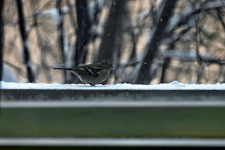 crumb: One titmouse bird Paries sit  on balcony with crumb, Bulgaria