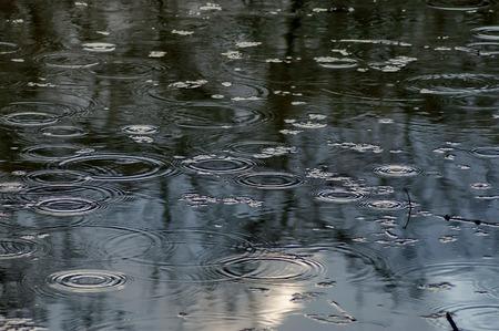 kropla deszczu: Staw w parku w lekkim deszczem, Sofia, Bułgaria Zdjęcie Seryjne