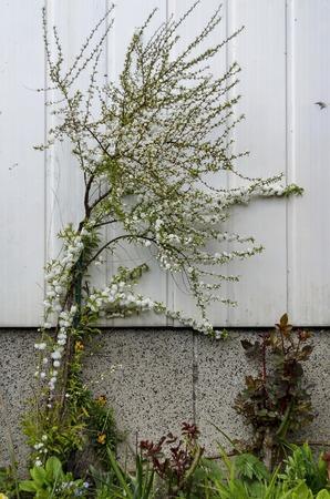 sofia: Background of flowers various in garden, Gerena, Sofia, Bulgaria Stock Photo