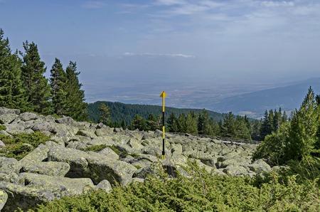 rocky mountain juniper: Unique stone river with big granite stones or moraine in the Vitosha National Park Mountain , Bulgaria