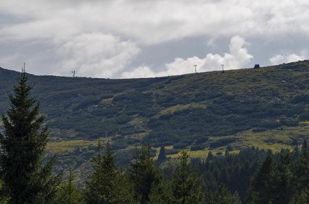 View toward green forest with pine trees and  glade, Vitosha mountain, Bulgaria Stock Photo