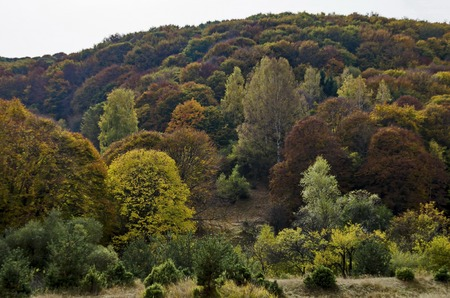 Colorful autumn landscape in the Vitosha mountain, Bulgaria