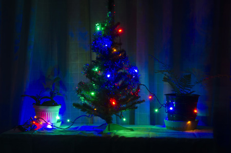 Christmas or  New year s tree with colorful light in warm home, Sofia, Bulgaria