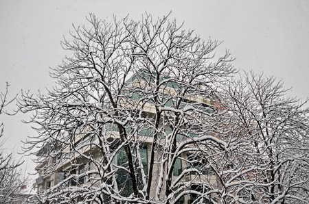 All white under snow, winter landscape at trees covered with heavy snow, Sofia, Bulgaria