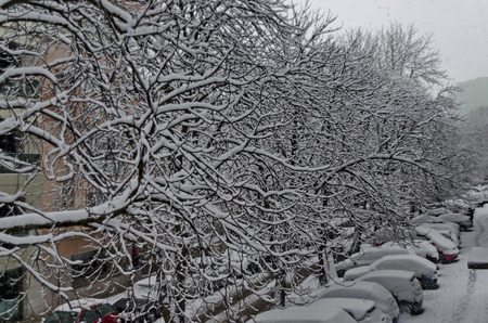 All white under snow, winter scenery at trees covered with heavy snow and street, Sofia, Bulgaria Stock Photo