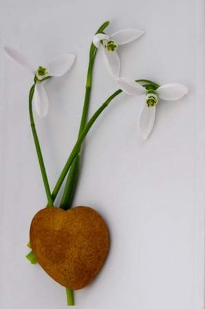 Valentine heart card design,  natural love with snowdrop and sweet biscuit, Sofia, Bulgaria