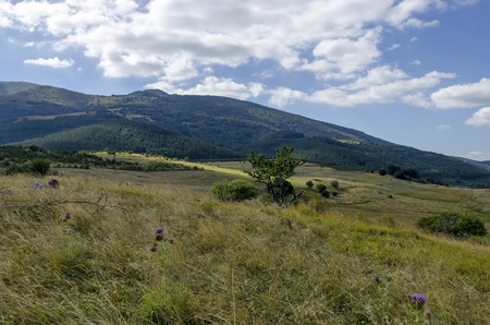 Panorama of green mountain forest and glade for hay in Vitosha mountain, Bulgaria
