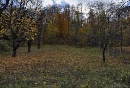 Small mountain orchard in autumn, Lakatnik,  Bulgaria