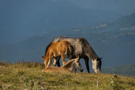 Paesaggio montano e cavalli selvaggi nel centro di Balcani, Stara planina, Beklemeto o Trojan, Bulgaria