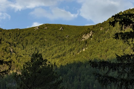 Mountain top overgrown with high trees, rock and glade of Rila mountain, Bulgaria