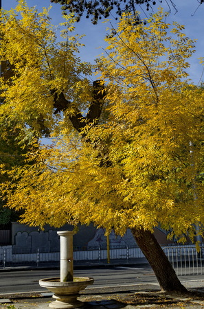 Branch of autumnal yellow foliage with fountain in Popular Zaimov park, Sofia, Bulgaria