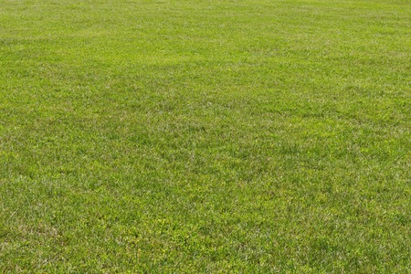 Background of natural green grass field  in the natural old West park, Sofia, Bulgaria Stock Photo