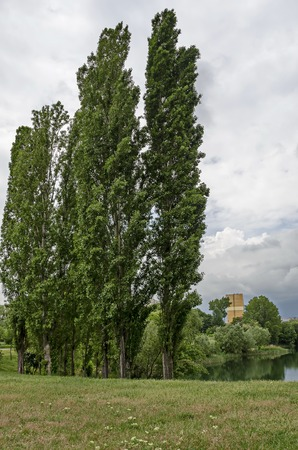 Springtime green on a beauty poplar or Populus and lake in residential district Drujba, Sofia, Bulgaria Stock fotó