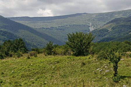 Panorama of glade and  green forest in front of Black peak, Vitosha mountain, Bulgaria