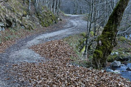 Ecological road through a mountainous autumn forest near a small river, Teteven town, Balkan mountain, Bulgaria
