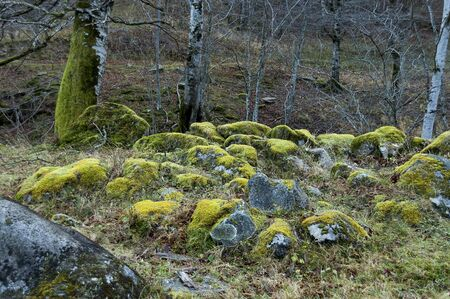 Mountain deciduous forest with big stones overgrown with moss, Balkan mountains, near Teteven, Bulgaria Imagens