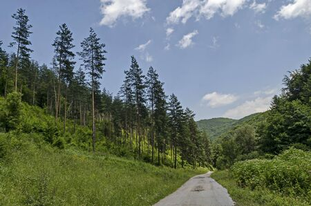 Summer sunlit coniferous forest with road, bushes and deciduous trees, Vitosha mountain, Bulgaria Imagens