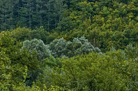 Autumn forest with coniferous and deciduous  trees and bushs in the Sredna gora mountain, Bulgaria