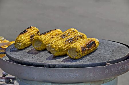 A few fresh corn cobs without green leaves on a baking tray, Sofia, Bulgaria