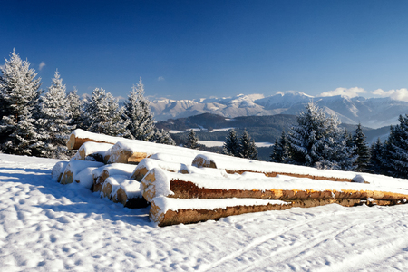 felled: Snowy landscape. Foreground with heap of wood from felled trees stored on a snowy meadow. Snow-capped mountains in the background. Stock Photo