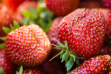 Fresh strawberries gathered in the garden.