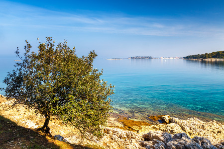 Green lagoon near Porec town on the Adriatic sea coast, with tree growing on the shore, Croatia, Europe.