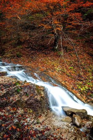 Stream in autumn forest.