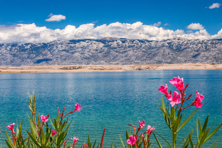The landscape with sea bay below the mountains of the national park Paklenica in Croatia, Europe. Flowers in foreground.