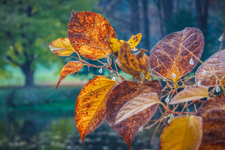 Leaves in autumn colors on tree in a park.