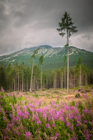 Forest calamity in the High Tatras National Park, Slovakia, Europe. 스톡 콘텐츠