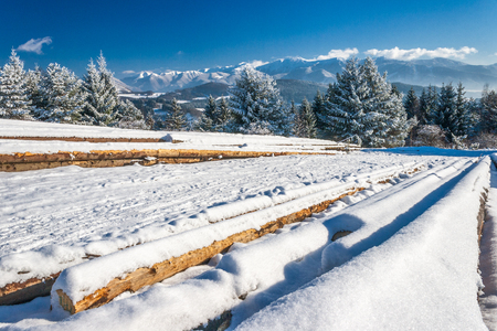 Snowy landscape at sunny day. Foreground with heap of wood from cut trees stored on a snowy meadow. Snow-capped mountains on background.