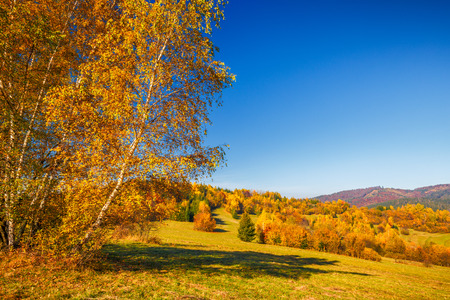 Landscape with a trees in autumn colors, Slovakia, Europe.