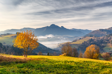 Tree in a foreground of autumn landscape with mountains at sunrise. Mala Fatra National Park, not far from the village of Terchova in Slovakia, Europe. 写真素材