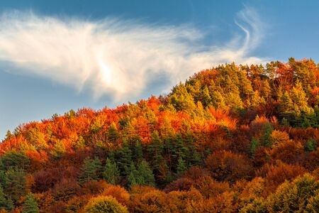 Forest in autumn colors at sunset. Stockfoto
