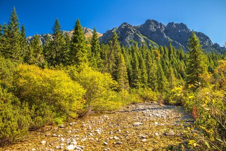 Mountain landscape with a stream at autumn season. The Popradske pleso lake in High Tatras National Park, Slovakia, Europe. Фото со стока