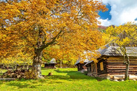 Autumn landscape with orange colored tree and wooden cottages in the Podsip settlement in north of Slovakia, Europe. Stockfoto - 132453841