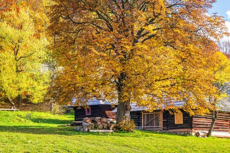 Autumn landscape with orange colored tree and wooden cottages in the Podsip settlement in north of Slovakia, Europe.