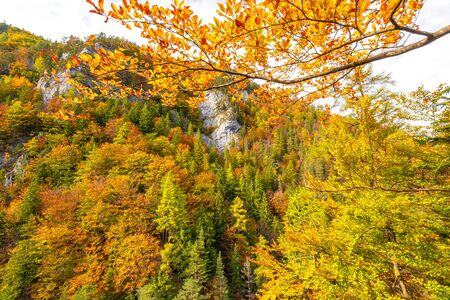 Trees with colorful leaves in an autumn forest. Kvacianska Valley in Liptov region of Slovakia, Europe. Stockfoto - 132456855