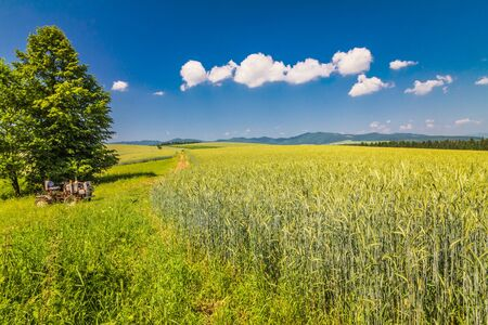 Country landscape with barley field on a sunny day. Blue sky with a puffs on background. Stockfoto