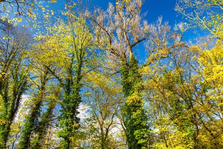 Leaves of tree in an autumn park during a sunny day. Stockfoto
