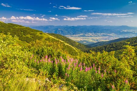 Mountainous landscape with a fireweed flowers in the foreground. The Mala Fatra national park, Slovakia, Europe. Stockfoto