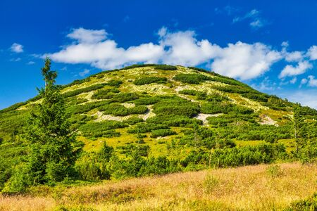 The Chleb, hill in the Lesser Fatra. Mountainous landscape with a tree in the foreground. The Mala Fatra national park, Slovakia, Europe.