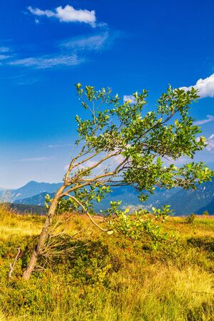 Mountainous landscape with a tree in the foreground. The Mala Fatra national park, Slovakia, Europe.