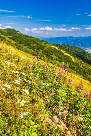 Mountainous landscape with a flowers in the foreground. The Mala Fatra national park, Slovakia, Europe. Stockfoto