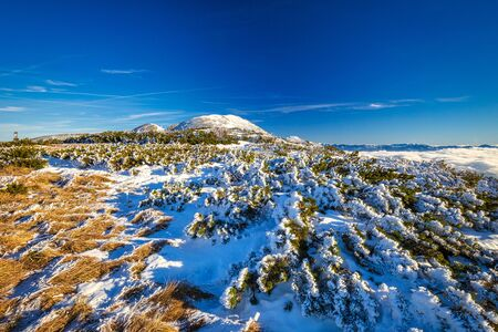 Winter mountain landscape with with snowy scrub in the foreground at a sunny day. The Mala Fatra national park in Slovakia, Europe. Stockfoto