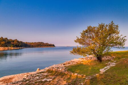 Green lagoon sea bay in Porec, a tree in foreground, Croatia - Istria, Europe.